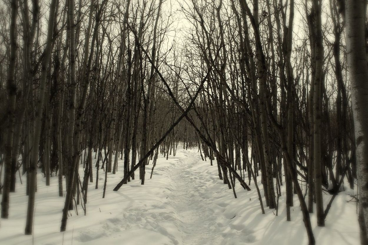 Nature's Diversities Walking In The Woods Outdoors Natural World Landscape_Collection Assinaboine Forest Winnipeg Manitoba Canada Winter Landscape Snowy Landscape Birch Trees Forest Photography Forest Path X Marks The Spot Natural Symmetry Designs In Nature Lines In The Woods Triangles X Cross Witchy Witchyvibes Landscapes With WhiteWall EyeEm Nature Collection Landscapes The Great Outdoors - 2016 EyeEm Awards