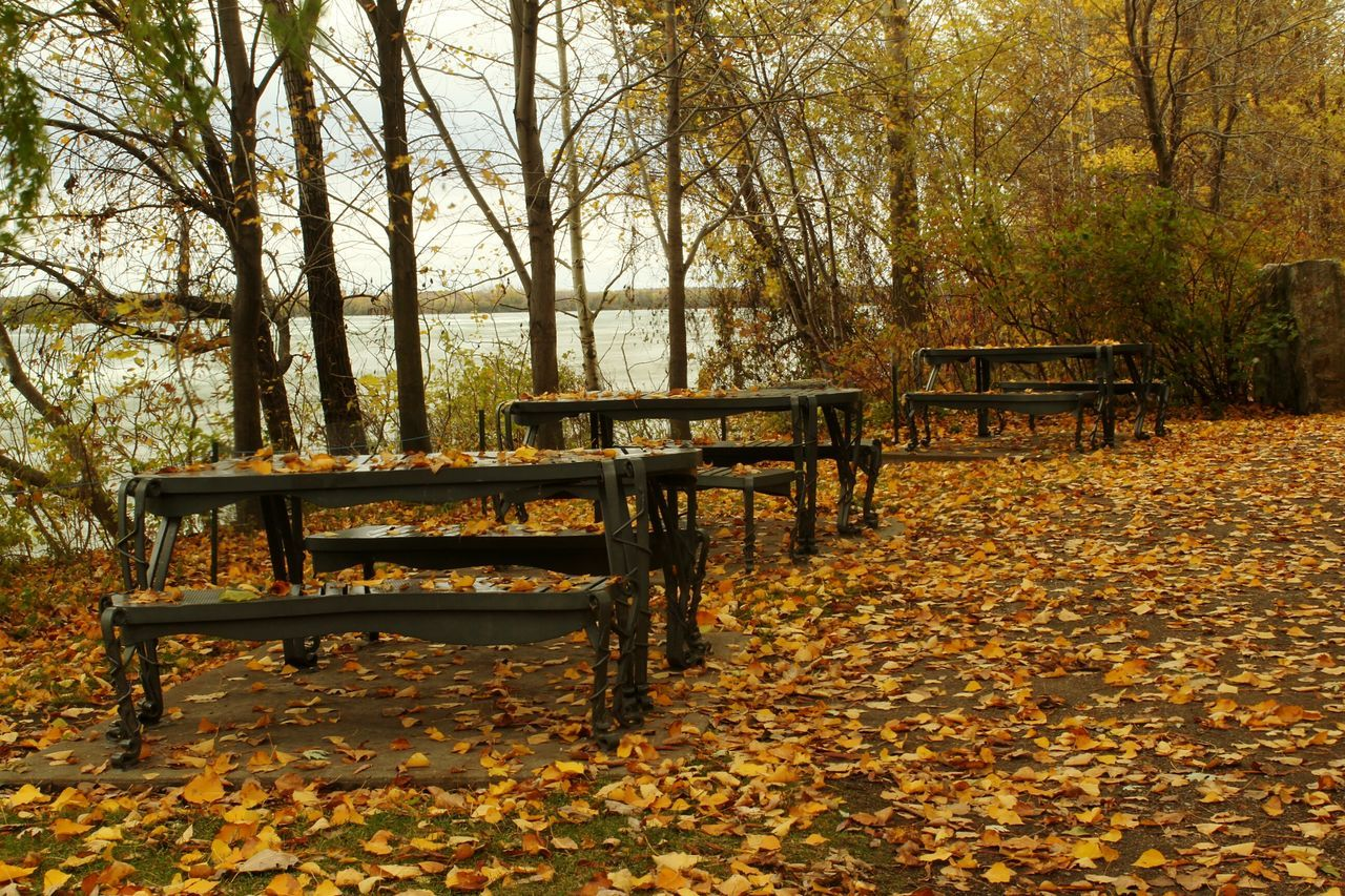 Tree Bench Wood - Material Park - Man Made Space Nature No People Outdoors Beauty In Nature Autumn Day Beauty In Nature