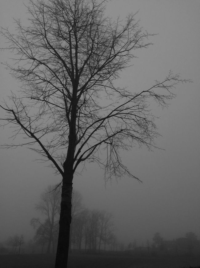 Tree_collection  Blackandwhite Photography EyeEm Nature Lover