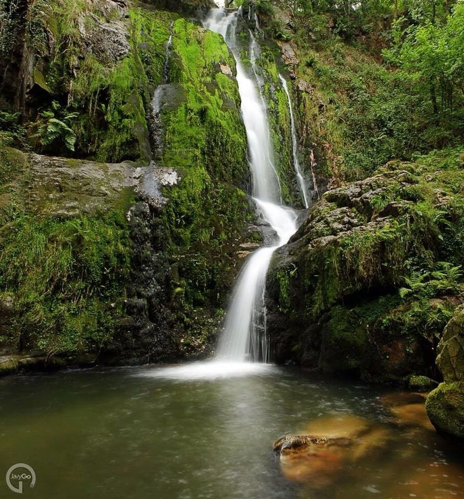 Forest Asturias Nature Fall