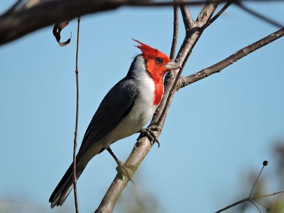 Beautiful stock photos of woodpecker, Animal, Animal Themes, Animal Wildlife, Animals In The Wild