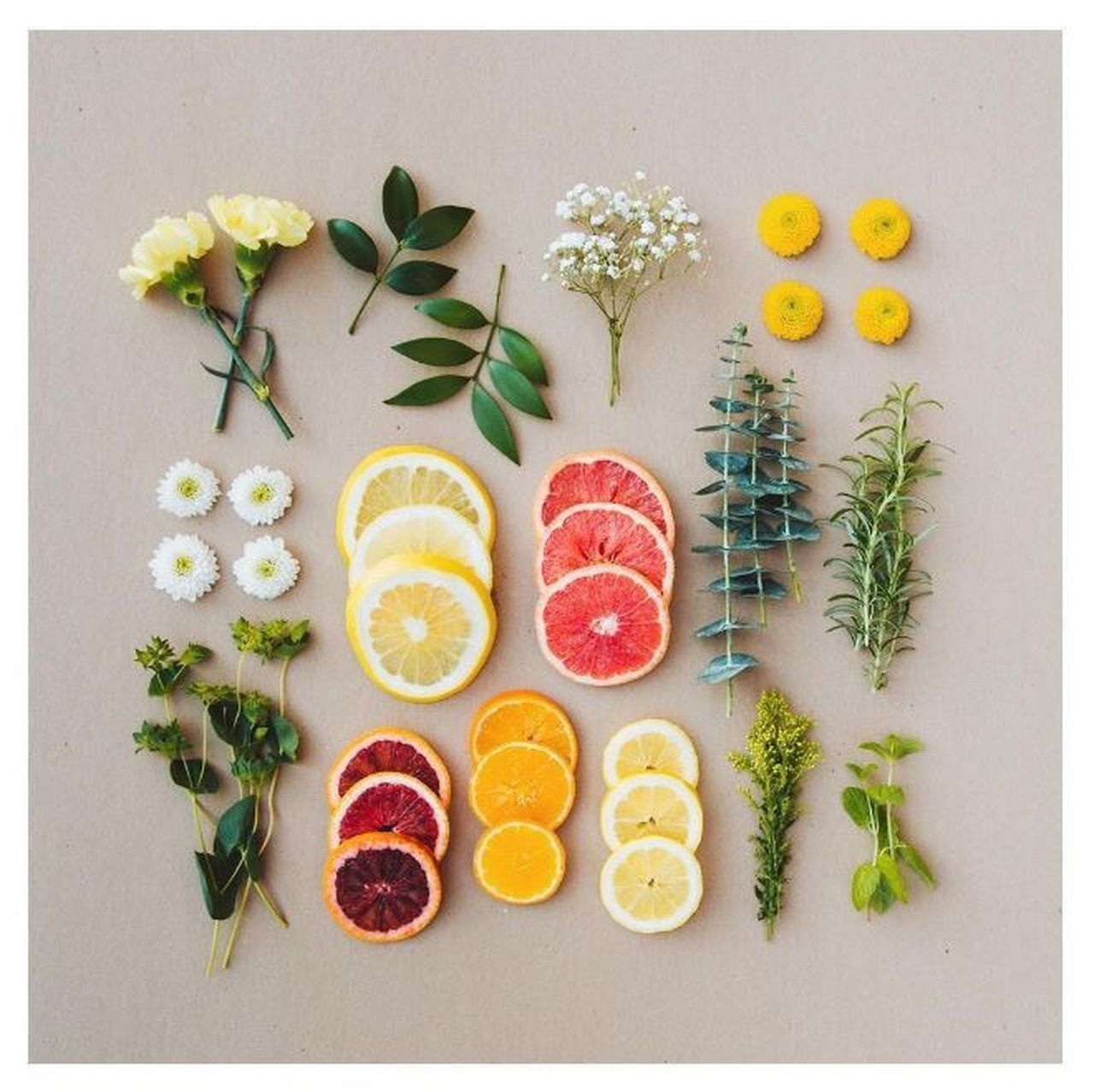 Variation Directly Above Fruit Food Studio Shot No People SLICE Arrangement Healthy Eating Freshness Grapefruit Kiwi - Fruit Indoors  Day Propstyling Foodstyling Foodphotography