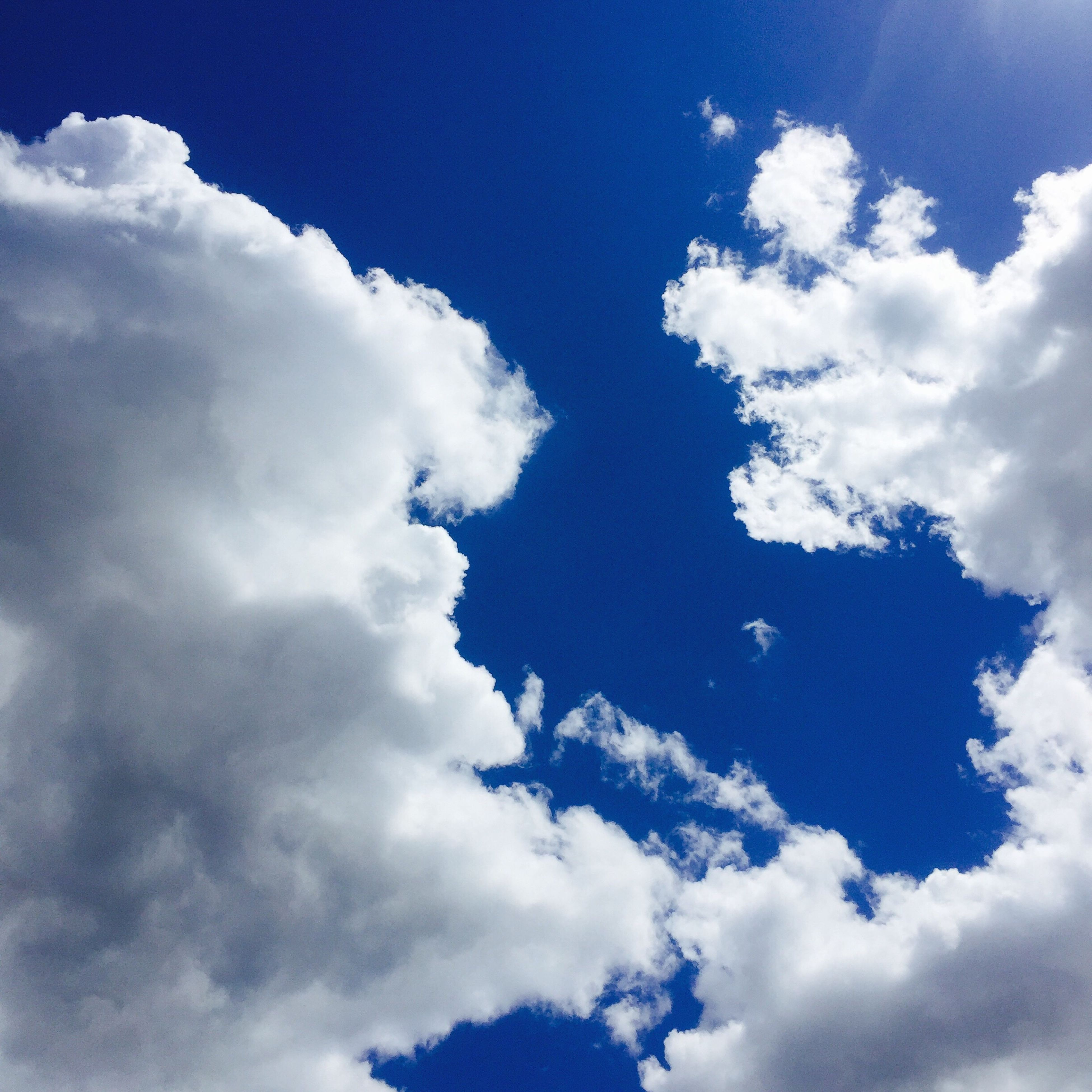 low angle view, sky, cloud - sky, flying, blue, nature, beauty in nature, sky only, cloud, tranquility, cloudy, animal themes, scenics, bird, white color, mid-air, day, cloudscape, tranquil scene, outdoors