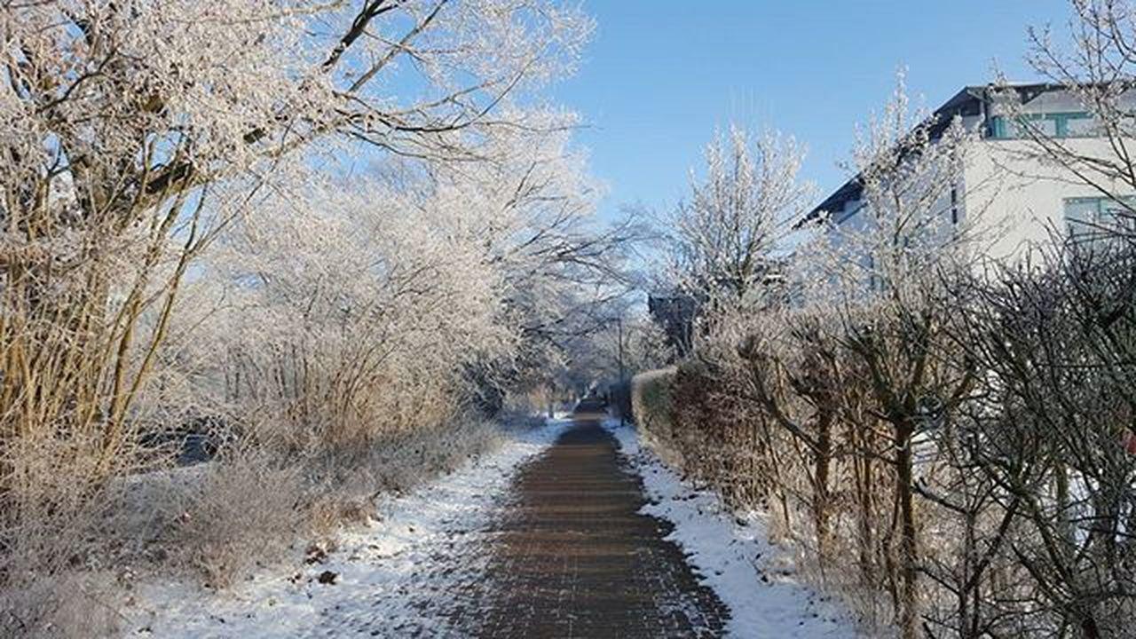 Nofilter Schwerin Instanature Instanaturelover Nature Lovers Nature_perfection Nature Winter Snow Trees Mvliebe Mv_liebe Mecklenburgvorpommern Igersgermany Ig_nature Tree_captures Tree Winterwonderland