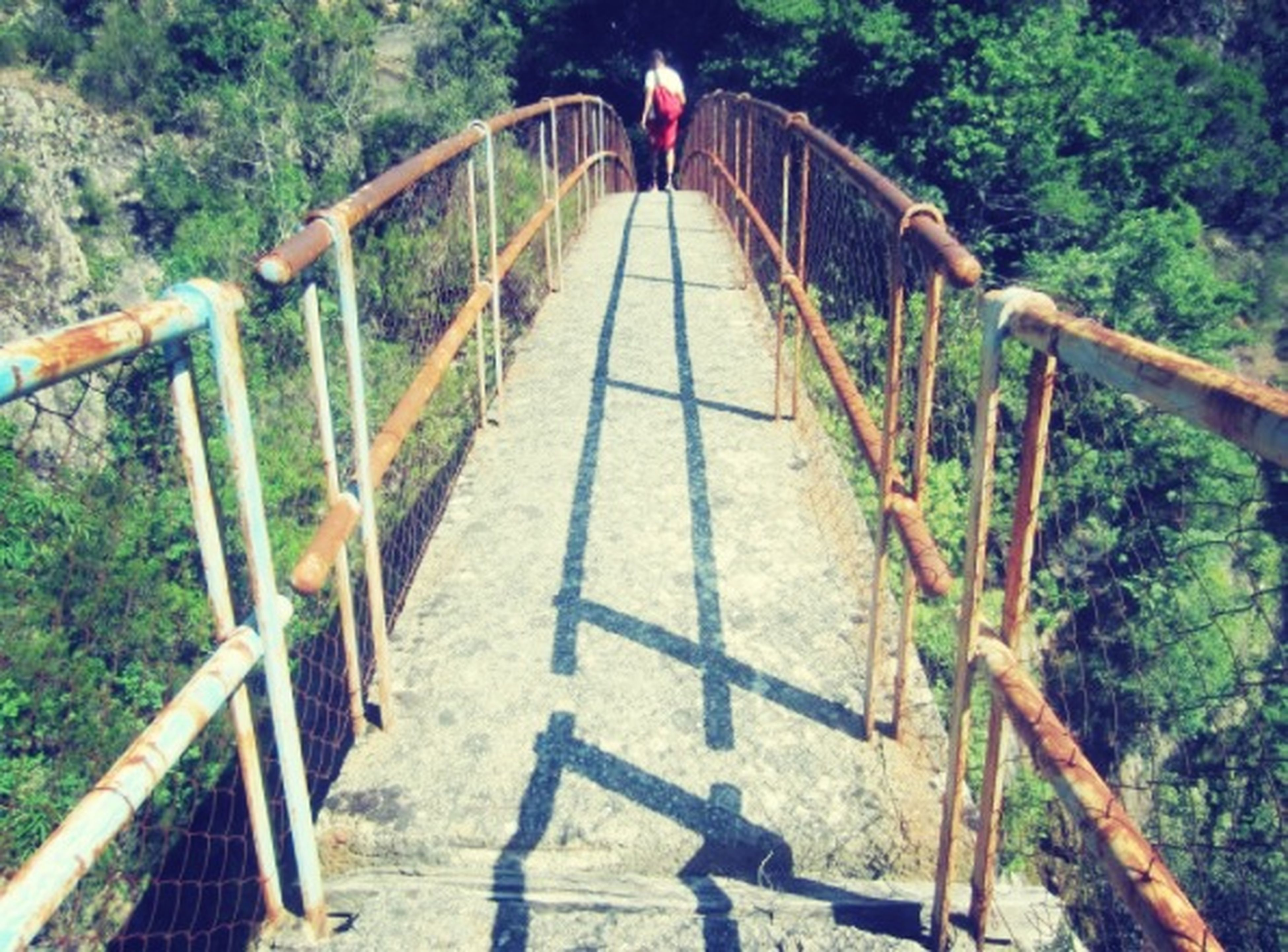railing, the way forward, footbridge, tree, connection, bridge - man made structure, diminishing perspective, steps, steps and staircases, tranquility, nature, forest, vanishing point, walking, growth, high angle view, bridge, plant, built structure
