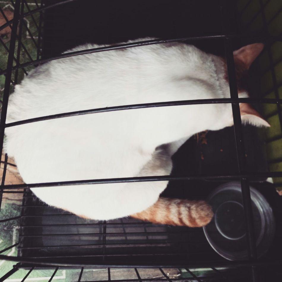I saw Muta hahaha Gkids Thecathreturns Cutest Cat ever