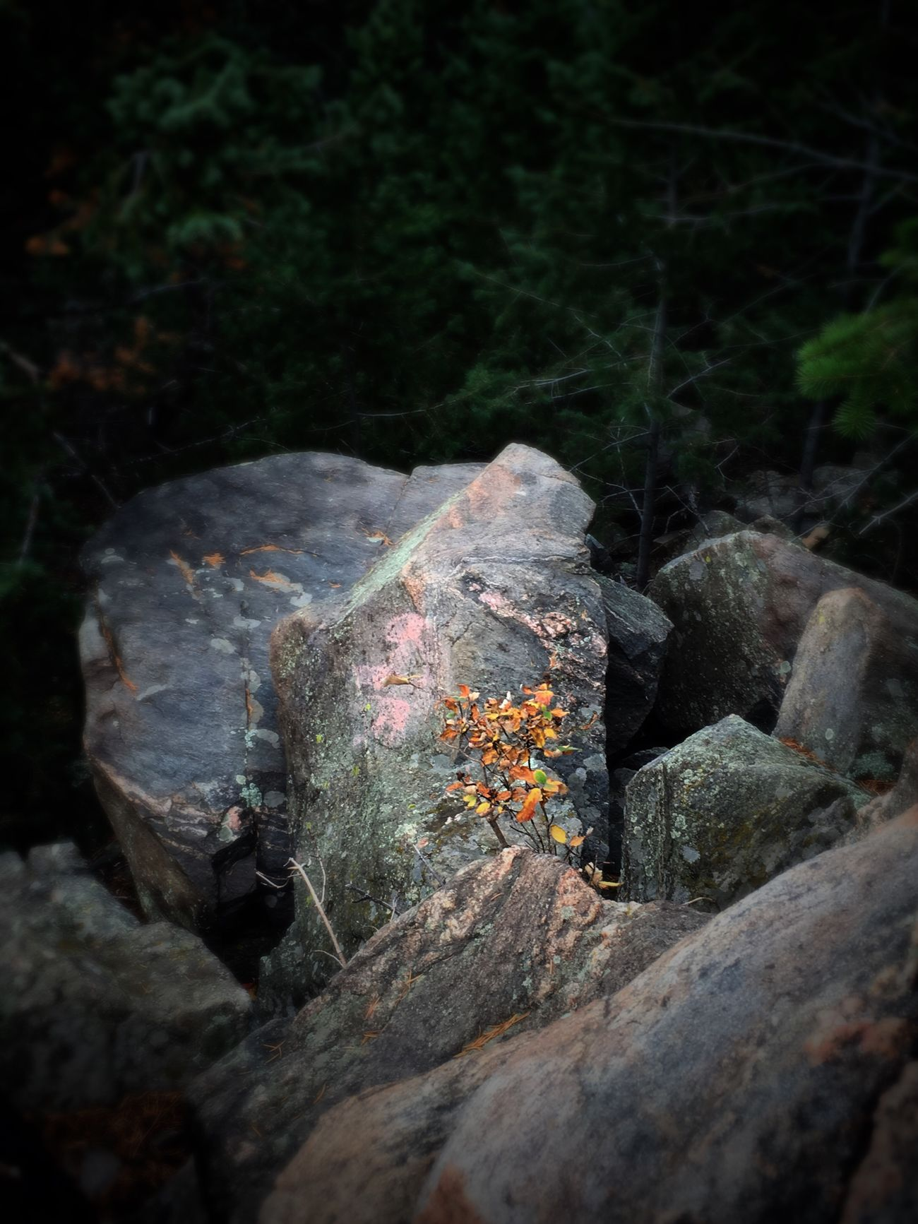 Nature Forest Beauty In Nature Outdoors Leaf Autumn Blurred Rocks Denver,CO Lookout Mountain