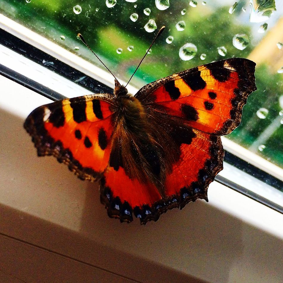 бабочка гусеница залетела лето