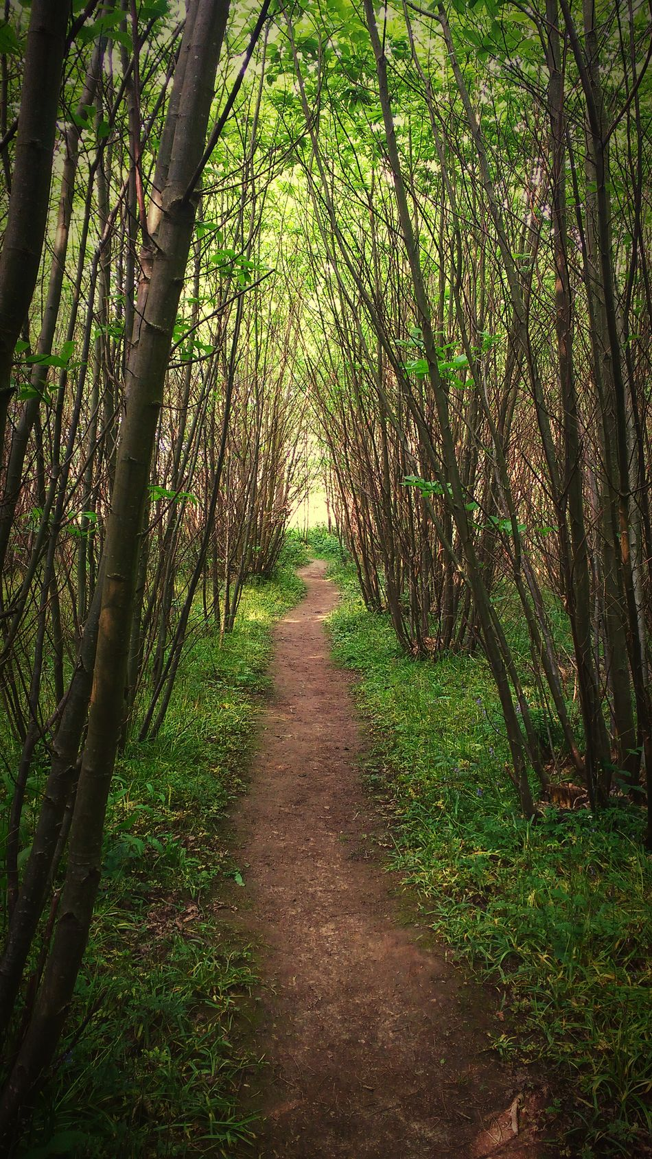 Taking Photos England, UK Kent Kingswood Woodscapes Woods Trees Treescape Enjoying Life Path In Nature Nature_collection Nature Photography Nature On Your Doorstep