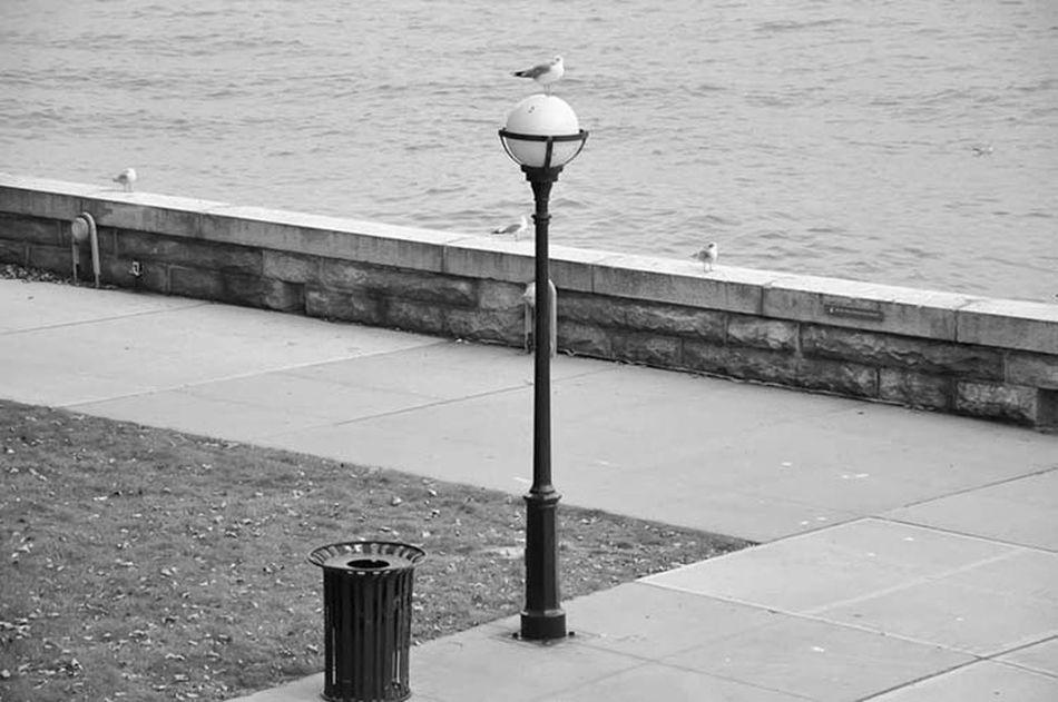 Streetphotography Blackandwhite Photography VSCO Park Streetphoto_bw