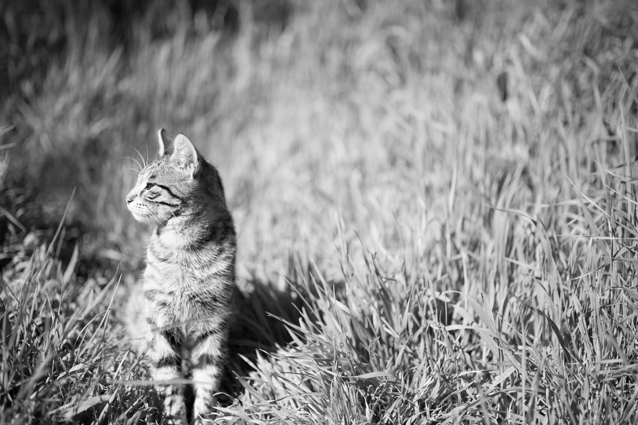 Stray Kitten in Grass Animal Themes Black & White Black And White Blackandwhite Bokeh Cat Cats Day Domestic Cat Feline Focus On Foreground Grass Grassy Istanbul Istanbuldayasam Kitten Monochrome Nature One Animal Outdoors Pets Portrait Stray Cat