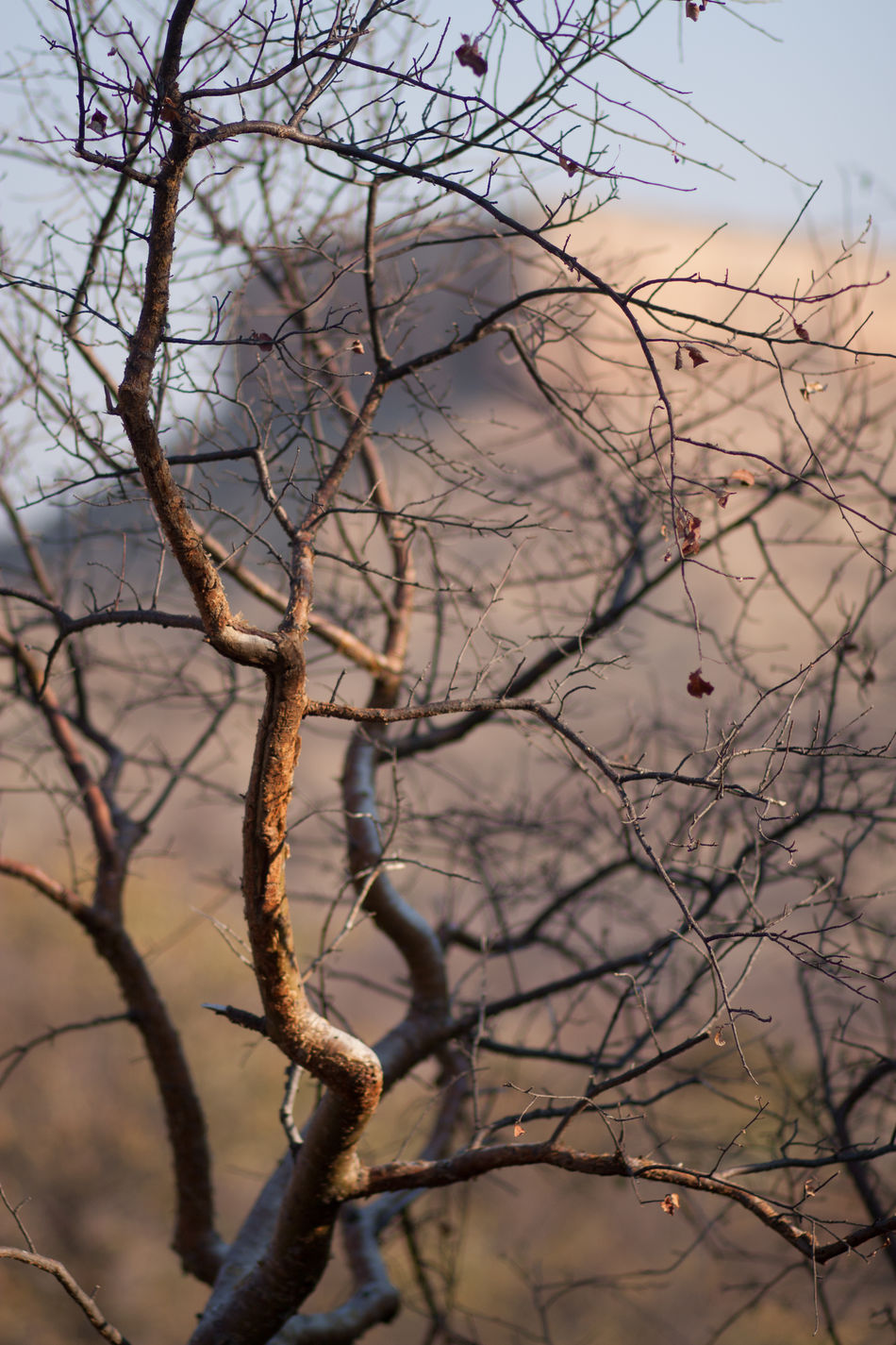 Beautiful stock photos of tree, Bare Tree, Branch, Close-Up, Day