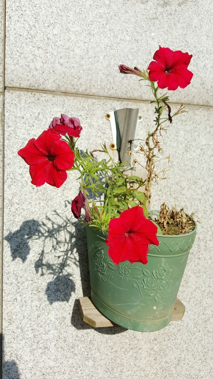 Red Flowers Flowerspot Lovely
