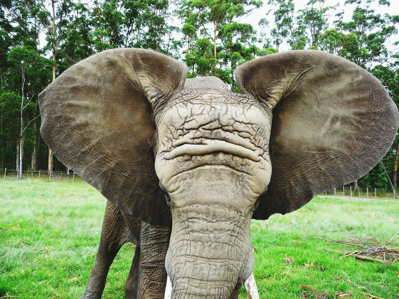 Elephant Grass Animal Themes Tree Nature Animal Trunk One Animal No People Day Animals In The Wild Outdoors Green Color African Elephant Mammal Safari Animals Tusk