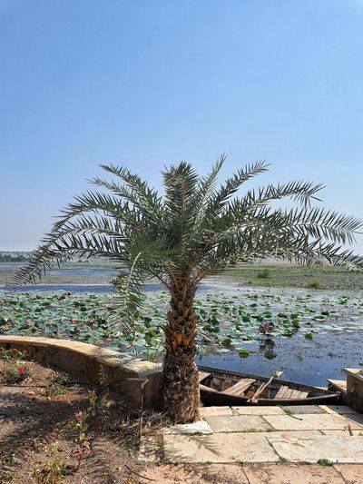 Lake Panagadh...oasis in the desert... Nature Outdoors Lost In The Landscape