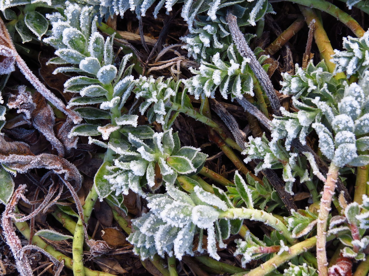 Cold Cold Days Cold Temperature Cold Weather Foliage Frost Frosted Frosted Nature Frosty Frosty Mornings Frozen Frozen Nature Hoar Frost Hoarfrost Plant Rime White Frost Winter Winter Winter Scene Winter Scenery Winter Season Winter Wonderland Winter_collection Wintertime
