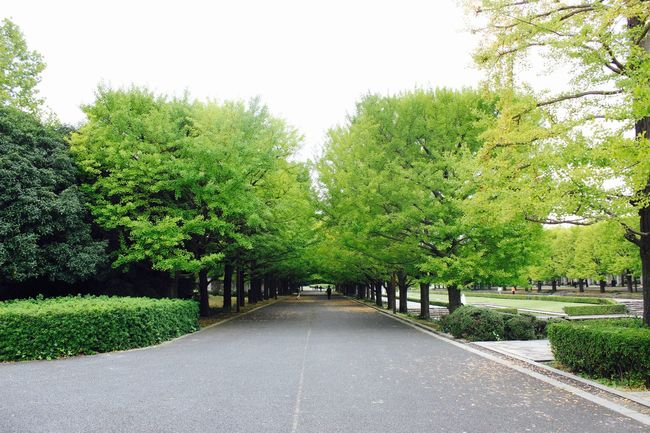 Beauty In Nature Clear Sky Day Empty Fall Footpath Green Green Color Growth Japan Narrow Nature Outdoors Park Park - Man Made Space Road Scenics Solitude Tranquil Scene Tranquility Travel Tree Walkway Wanderlust