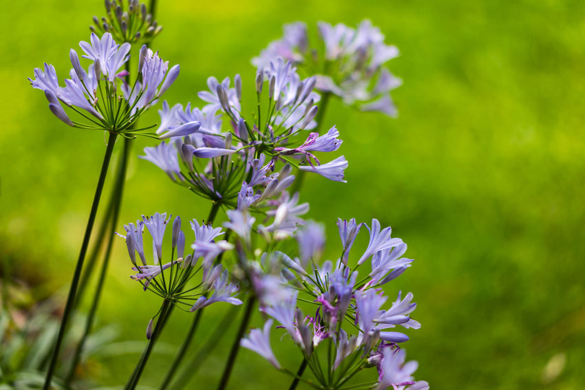 Spring Flowers Beauty In Nature Blooming Blossom Blue Day EyeEm EyeEm Best Edits EyeEm Best Shots EyeEm Gallery EyeEm Nature Lover EyeEmBestPics Flower Flower Head Flowers Freshness Green Color Nature No People Outdoors Petal Purple Selective Focus Softness Spring Tranquility