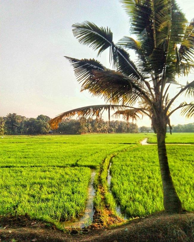 Loved this place 👈 eve click Kottayam 👍 Entekottayam Kerala Mobilephotography Photography PhotographyLove Greenearth Nature Happy Loved Cool Evening Instaclick Instagramlove Follow