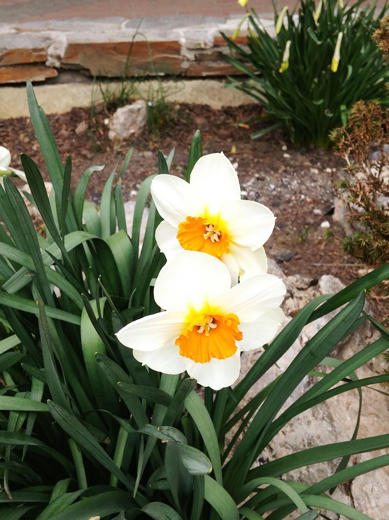 Primavera.