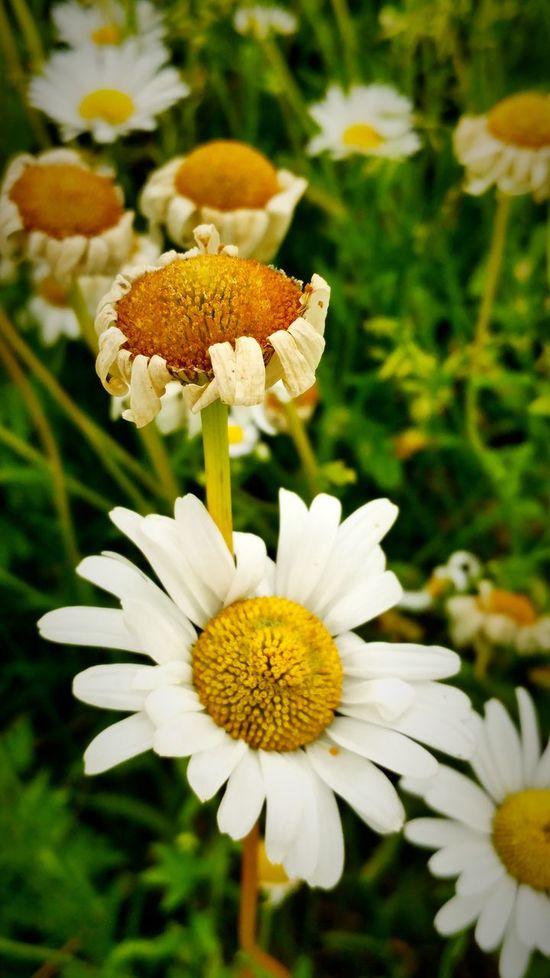 Flowers, Nature And Beauty Beautiful Nature Natural Beauty Beautiful View Flower And Pond