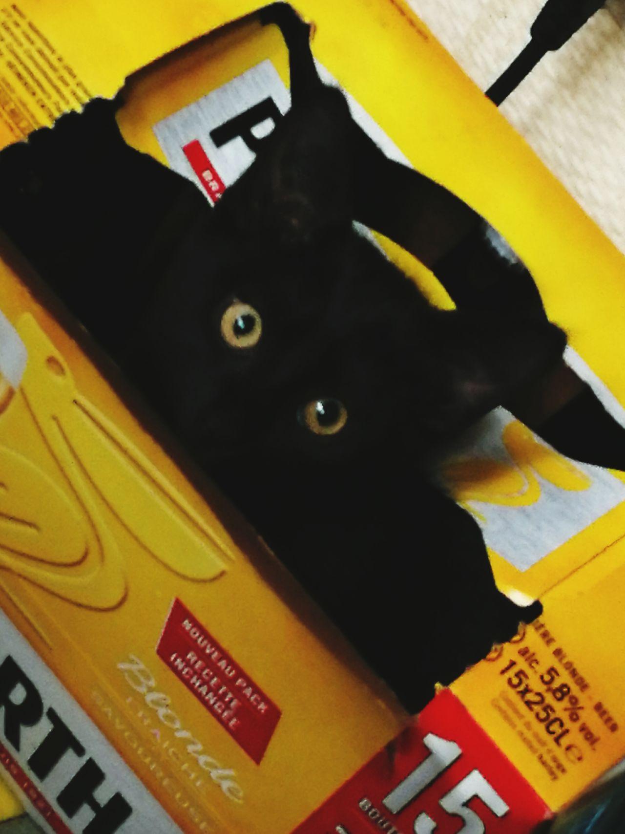 Chaton Babycat Cats 🐱 Cat