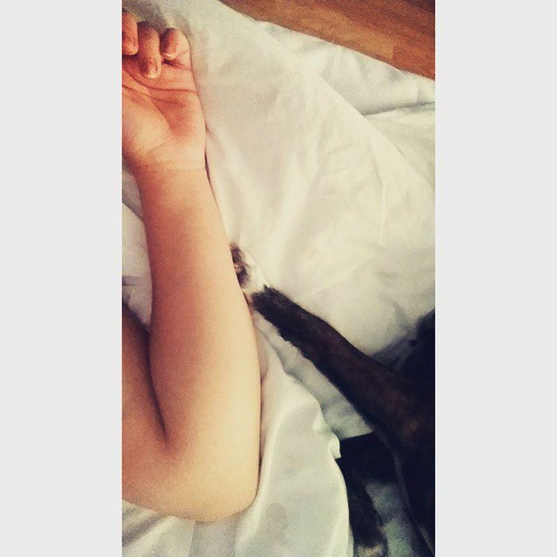 Gune bu sebekle baslamayi ozlemisim 💚🐾🌞 Love Bed Sleepy Dog Tarcin Morning