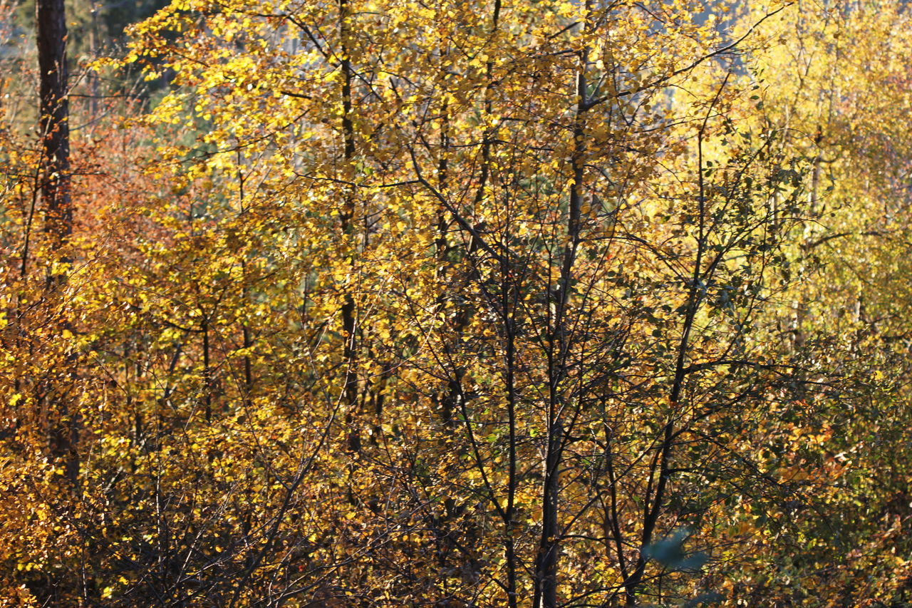 Autumn Autumn 2016 Change Close-up Day Fiè Allo Sciliar Full Frame Growth Italy Nature No People Outdoors Scenics Südtirol Trees And Bushes Yellow