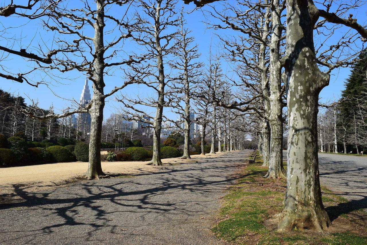 Bench City D5300 Park Shadow SHINJYUKU Shinjyukugyoen Tree