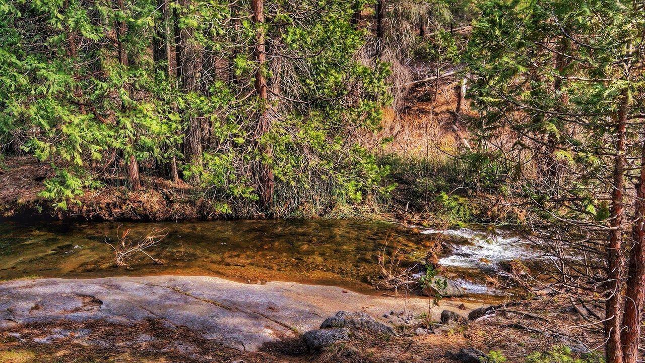 Stanisluas National Forest California Sierra Nevada Jenness Park River Forest Mountains Sony Sony Nex5r Sony Mirrorless Nex5r Snapseed Snapseed_HDR Snapseed Editing  Snapseed Edit