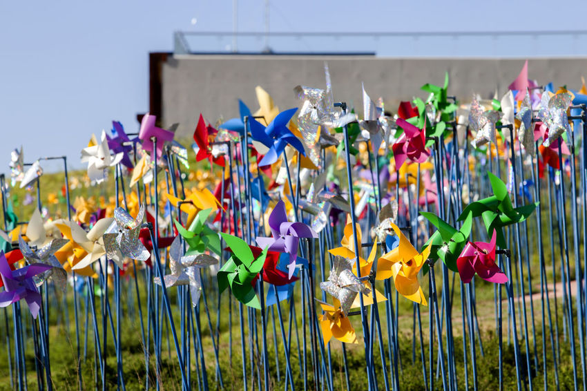 Close-up Day Flower Focus On Foreground Fragility Freshness Grass Imjingak In Front Of Large Group Of Objects Multi Colored Multicolored No People Outside Park Petal Pinwheel Pyeonghoa-Nuri Spinning Springtime