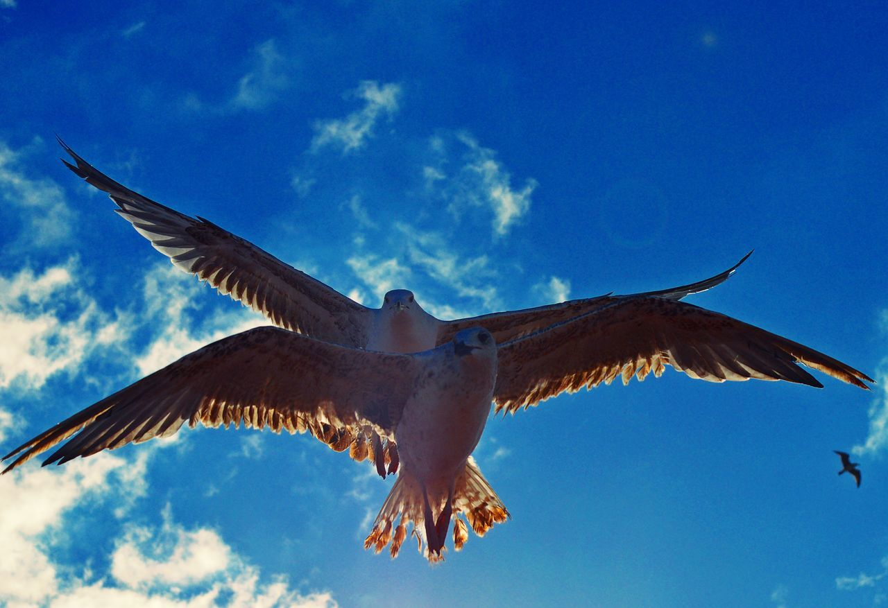 one animal, flying, spread wings, animals in the wild, animal themes, bird, mid-air, day, low angle view, animal wildlife, outdoors, sky, nature, full length, no people, bird of prey, close-up