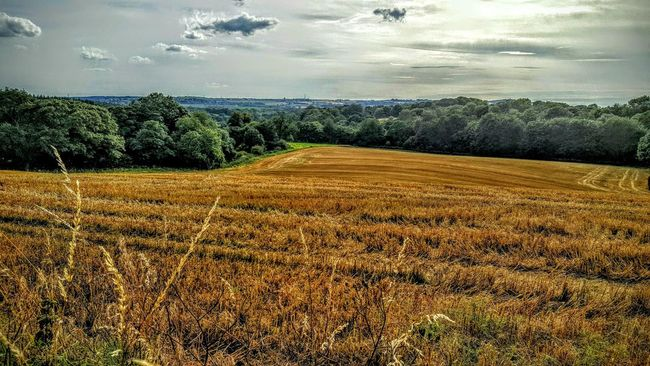 Landscape_photography Golden Fields Trees Distance Silver Sky Contrast Forest @ Aston Cheshire