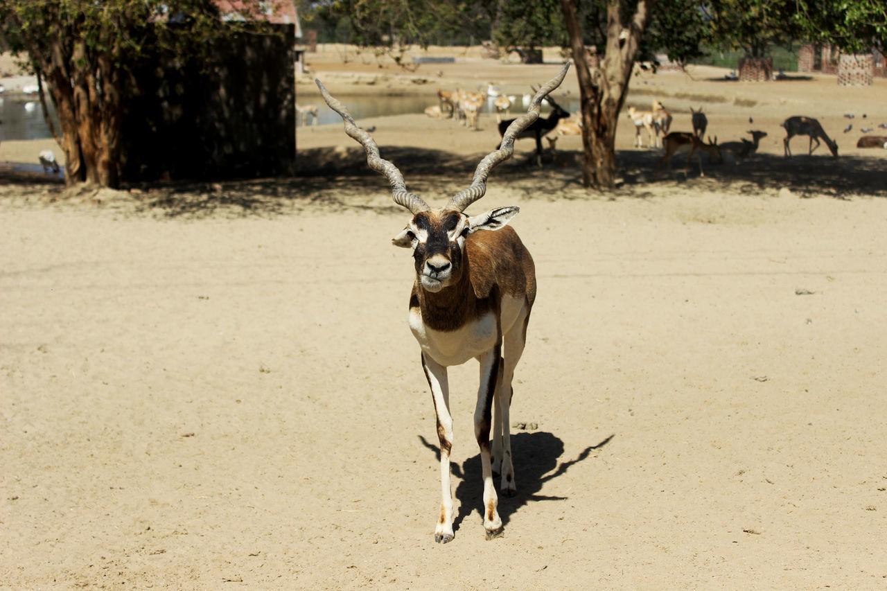 Animal Portrait Animal Posing Animal Themes Animal Wildlife Animals In The Wild Animals In The Wild Nature No People One Animal Young Animal