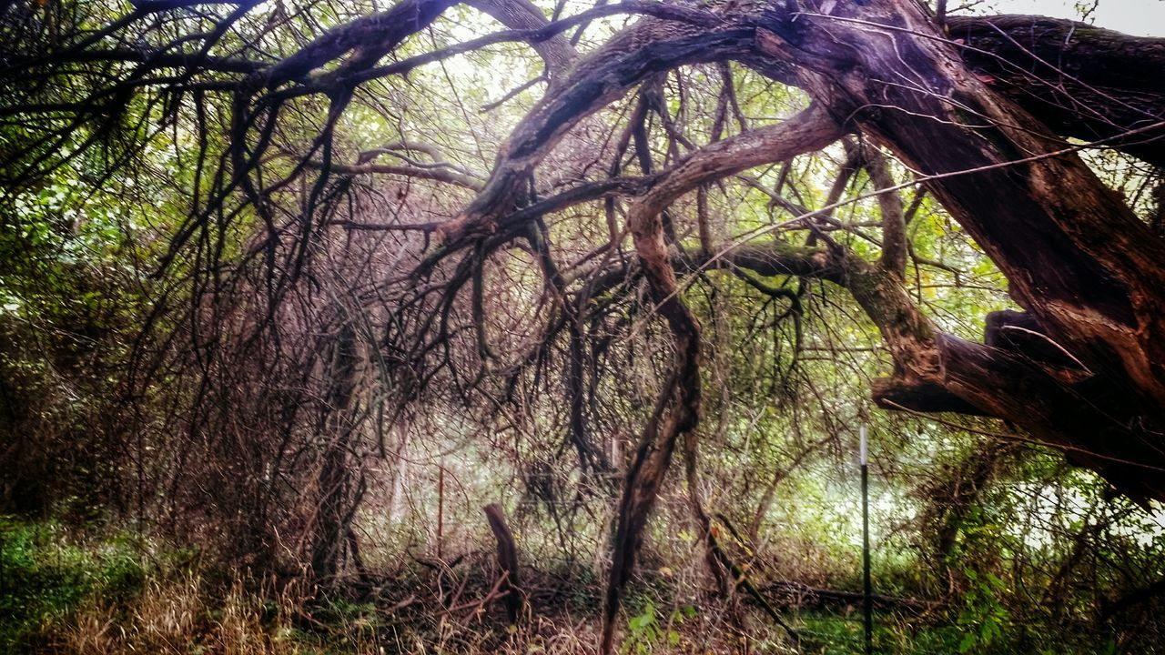 Our love aint nothin' but a moster with two heads. North Texas EyeEm Gallery Eyeemphotography Eeyemgallery Photography TreePorn Tree_collection  Twisted Dream Natural Beauty Autumn Colours EyeEm Nature Lover Getting Creative In The Middle Of Nowhere Naturelovers Backroading EyeEmTexas The Dithyramb Post (Banters)