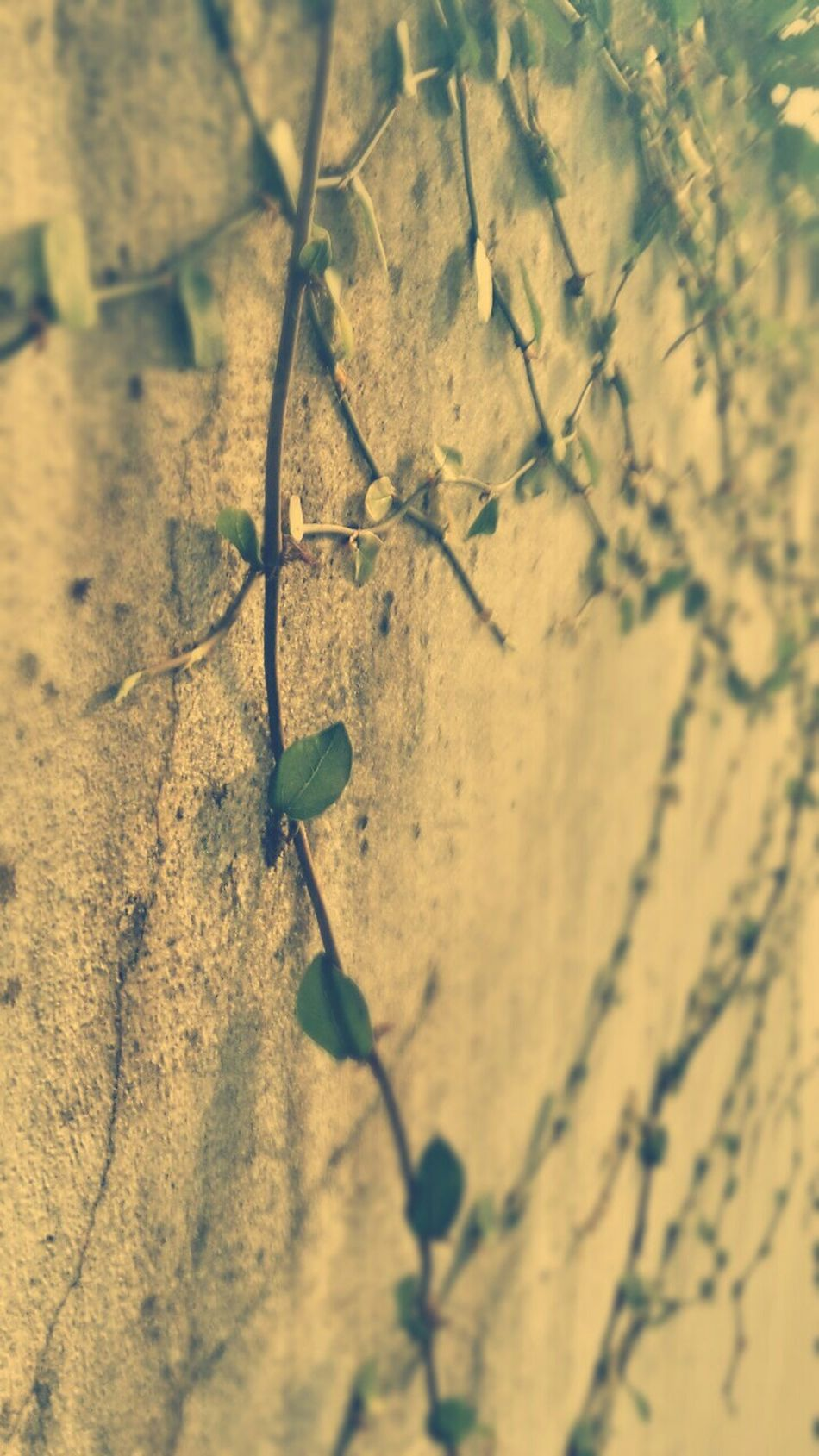 Wall With Leaves Alone Feeling Sick