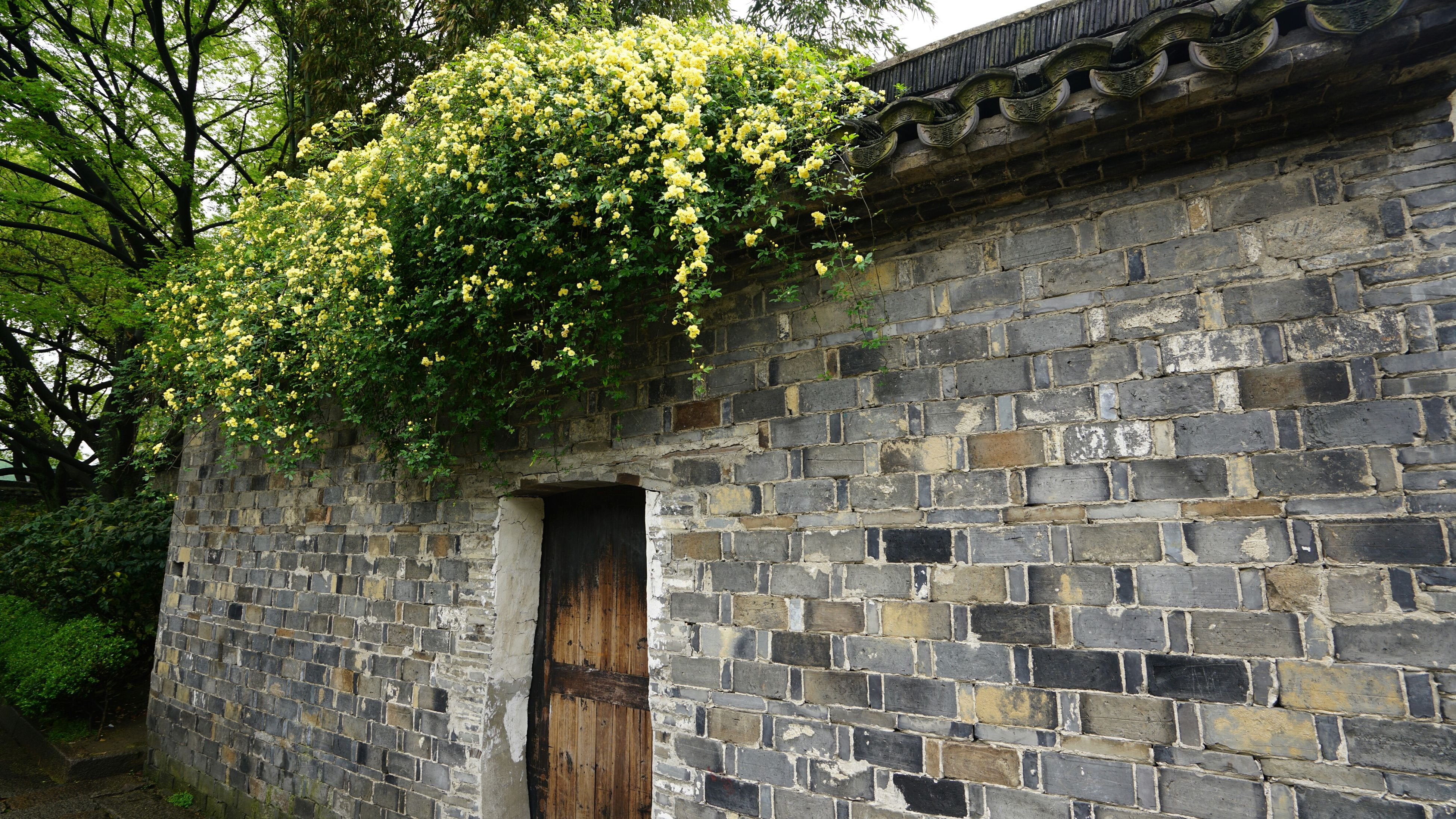 architecture, built structure, building exterior, stone wall, tree, old, growth, plant, brick wall, house, wall - building feature, green color, ivy, day, outdoors, no people, stone material, history, low angle view, building