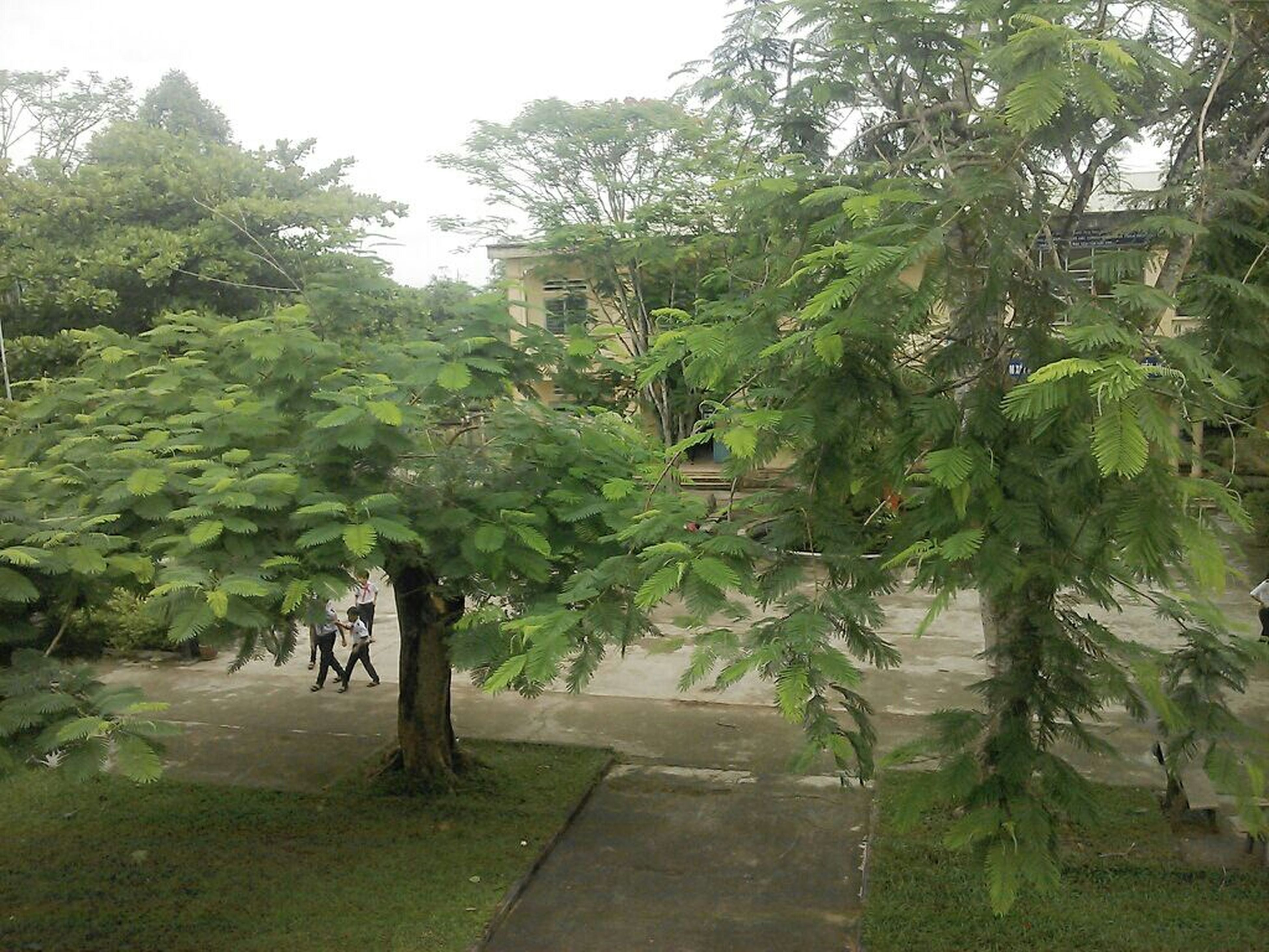 green color, growth, tree, plant, nature, tranquility, beauty in nature, park - man made space, leaf, tranquil scene, green, lush foliage, footpath, day, outdoors, formal garden, growing, grass, sunlight, freshness