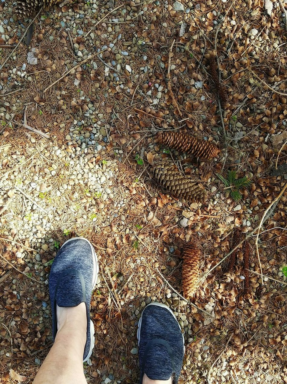 Low Section Human Leg One Person Shoe Human Foot Standing High Angle View Outdoors From My Eyes To Yours EyeEm Diversity Fine Art Photography Daytime Beauty In Nature Full Frame Looking Down Pinecone Rocks Woods Ground Twigs Pebbles Brown Color The Secret Spaces
