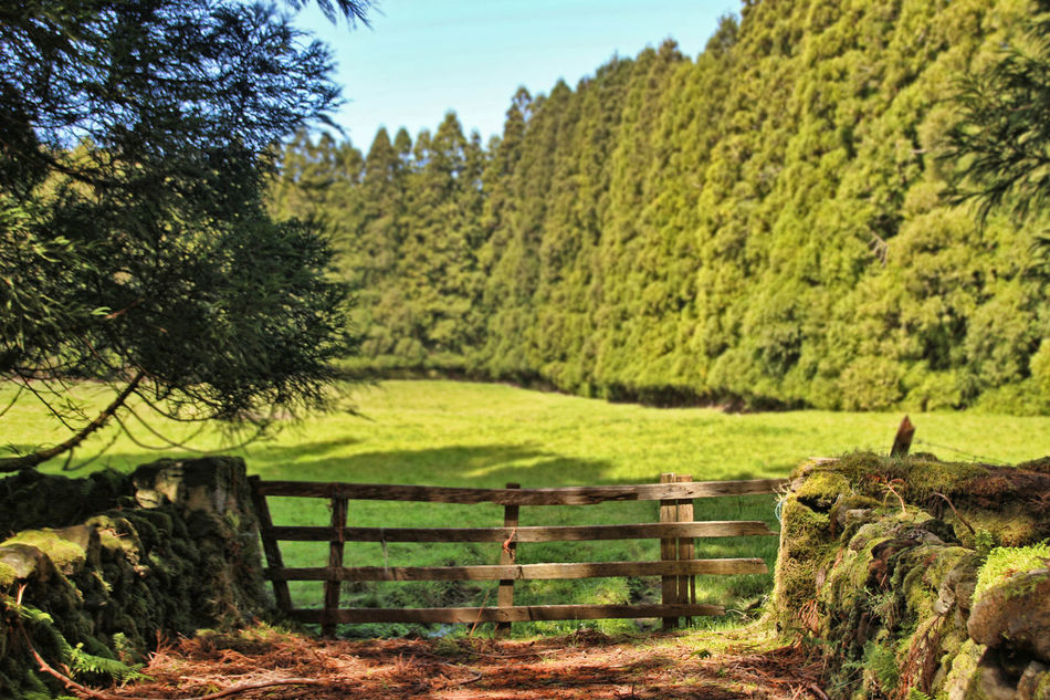 Terceira Island, Azores - Portugal Atlantida Azores Azores, Terceira Beauty In Nature Day Grass Green Color Growth Landscape Lush - Description Nature No People Ocean Outdoors Paradise Portugal Scenics Terceira Island Tranquil Scene Tranquility Tree