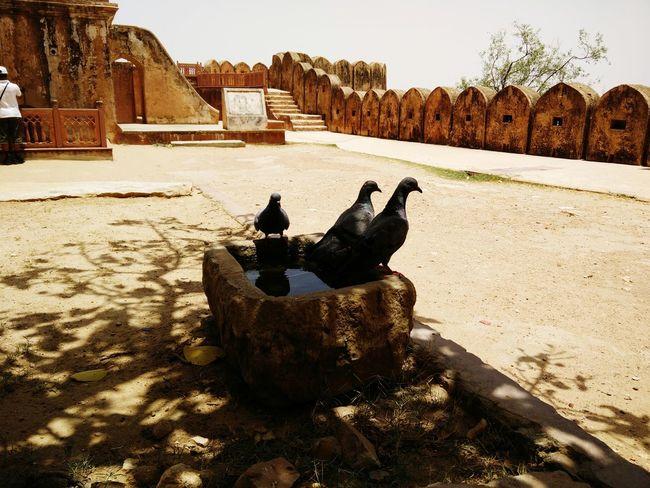 Pigeons Bath Pigeon Bird  Summer ☀ Water Fort Water For Birds