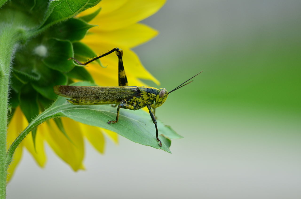 Beautiful stock photos of sonnenblume, Animal Themes, Animals In The Wild, Close-Up, Cropped