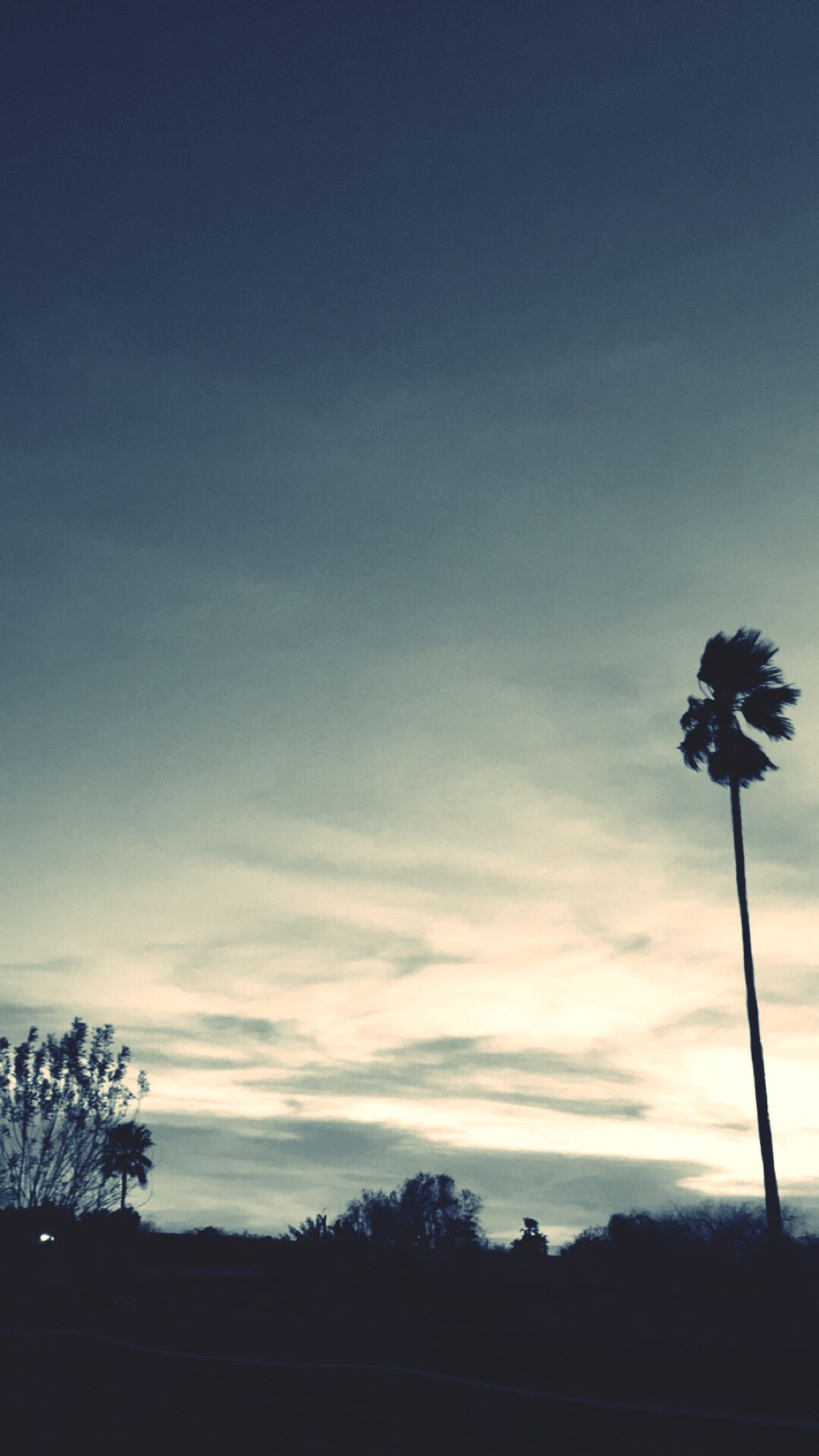 Sunset Snapchat Palm Tree Sky Clouds First Eyeem Photo