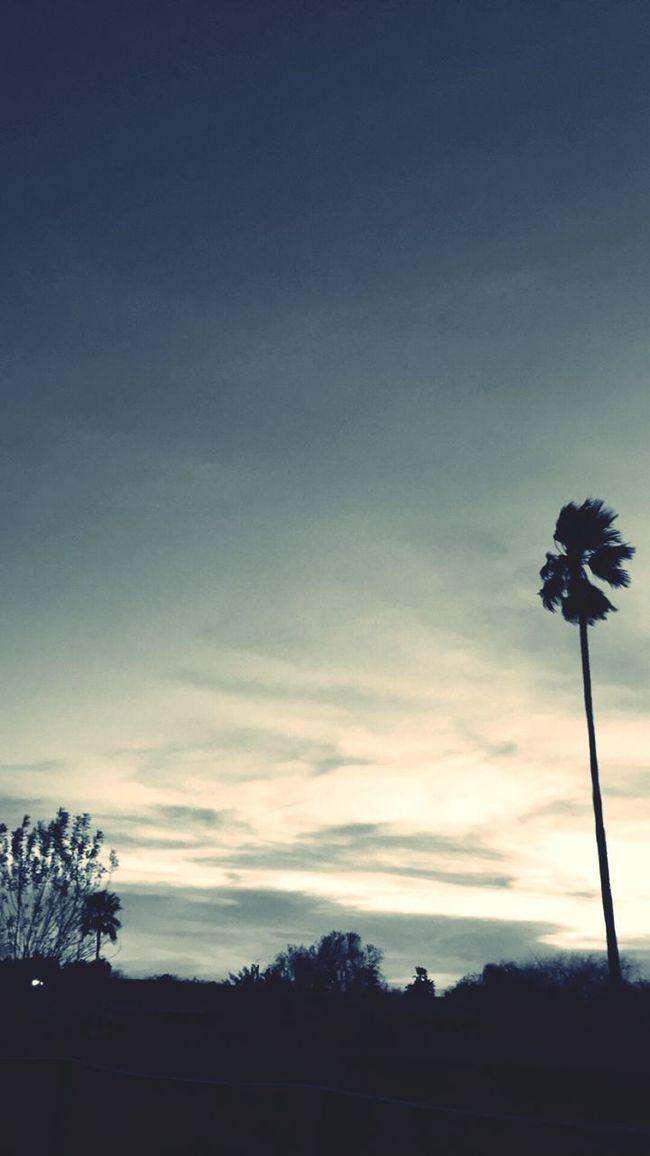 Sunset Snapchat Palm Tree Sky Clouds First Eyeem Photo