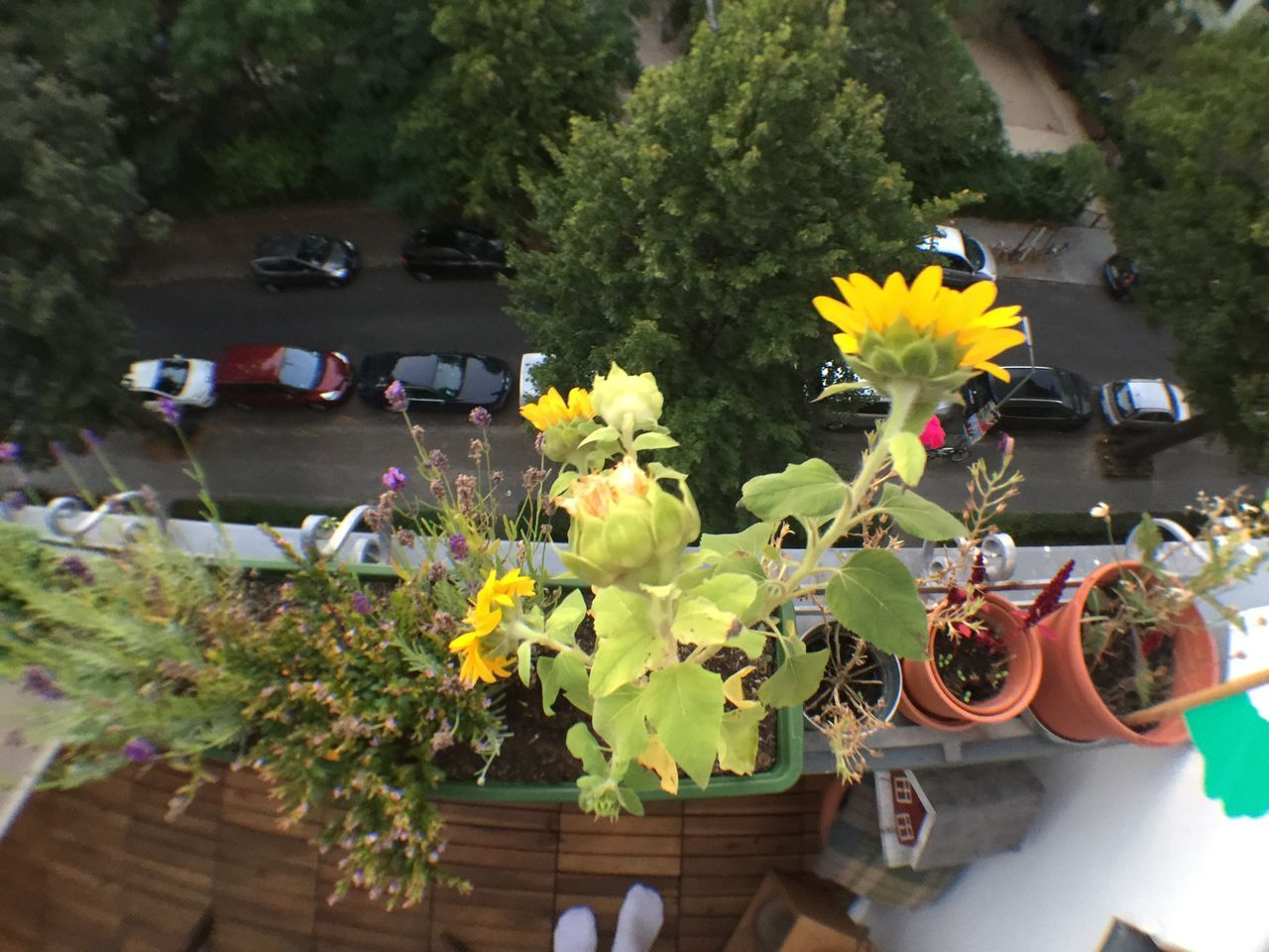 Arrangement Balcony Balcony View Beauty In Nature Blossom Botany Bouquet Bunch Of Flowers Flower Flower Arrangement Flower Head Flower Pot Flower Shop Fragility Freshness Growth In Bloom Land Vehicle Mode Of Transport Petal Plant Transportation Vacations Variation Yellow