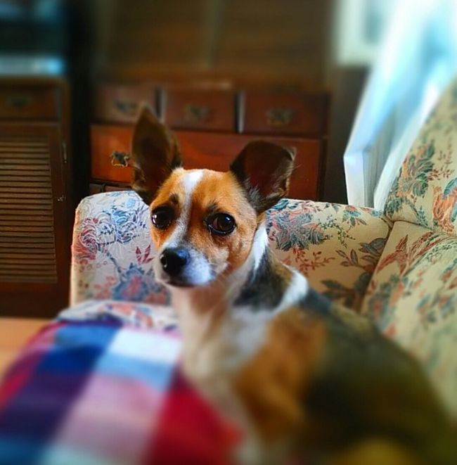 waiting for mom Waiting ... Pet Dogoftheday Dog Nellie