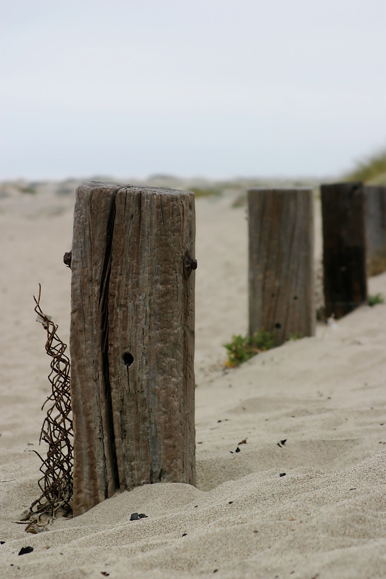 Old Fence Poles Old fence poles down by the beach. Beach Blue Coast Coastline Dune Dunes Fence Landscape Nature No People Old Outdoors Peace Peaceful Sand Sandy Shore Sky Solitude Tranquil Scene Tranquility Vacation Weathered Wood Wooden