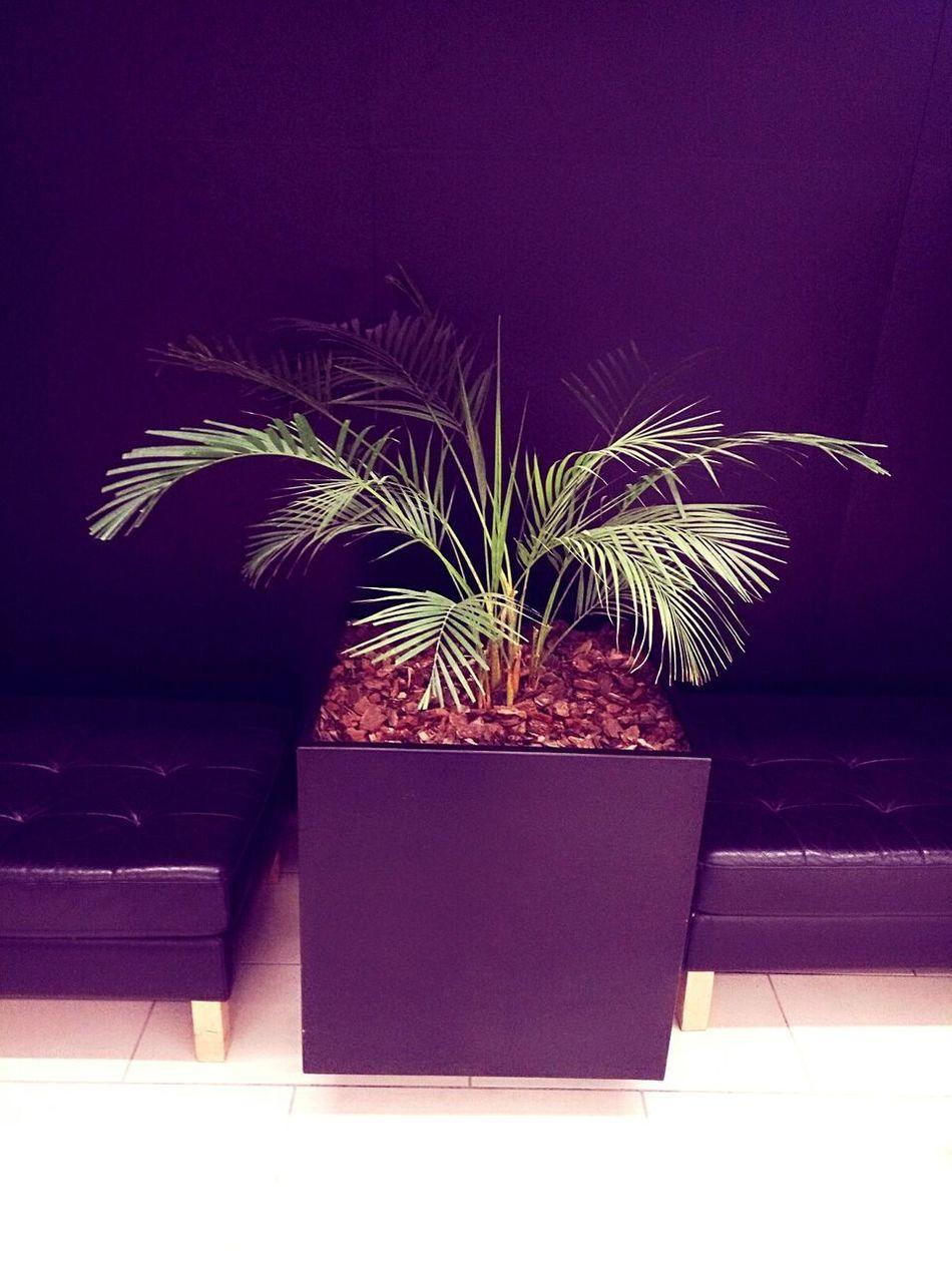 Plant Flower Pot Nature No People Beauty Potted Plant Plant Flower Pot Purple