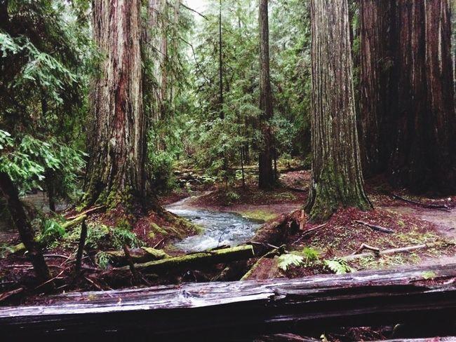 Montgomery Redwoods California Redwoods Northern California Water