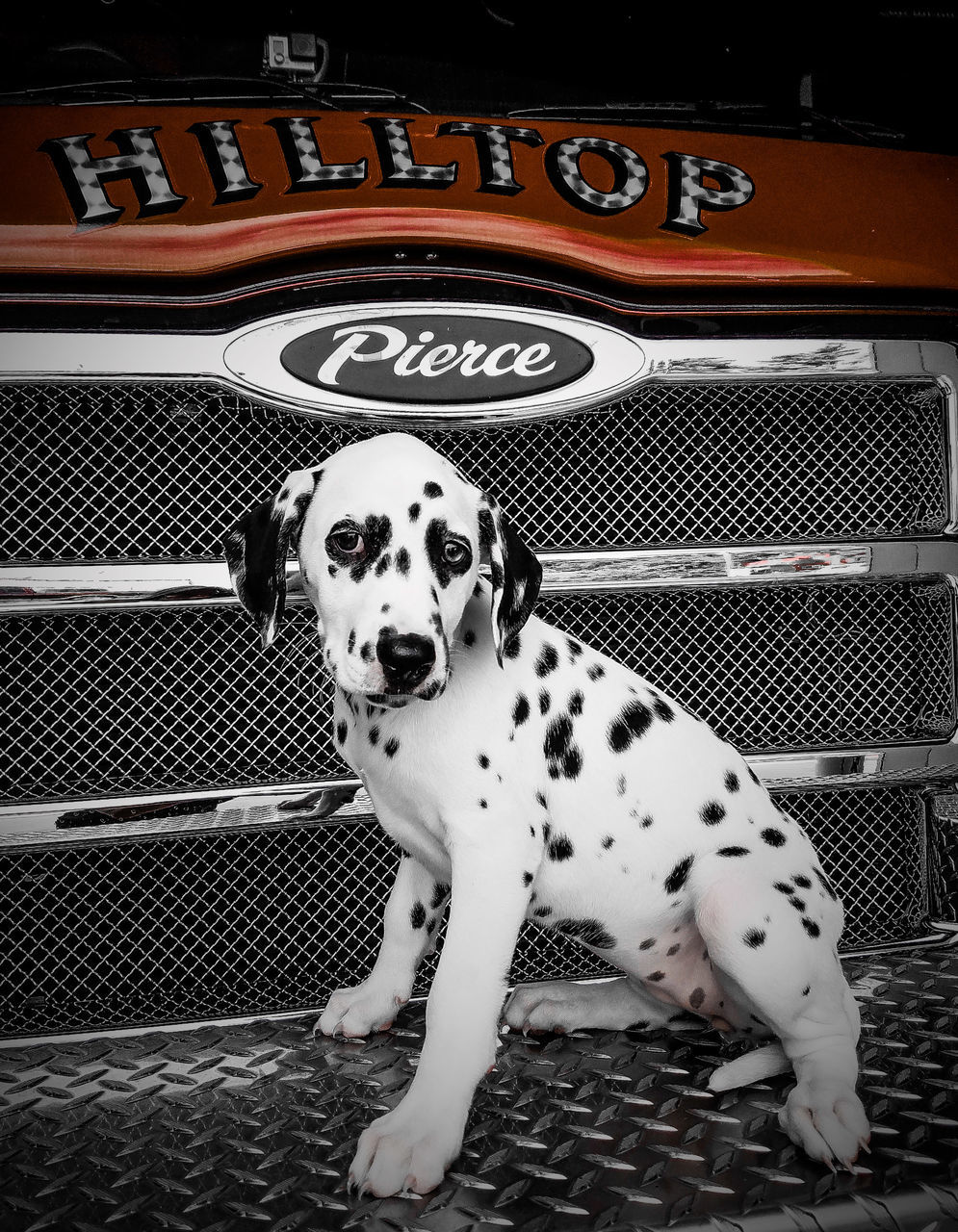 dalmatian dog, pets, dog, one animal, domestic animals, animal themes, mammal, day, no people, outdoors